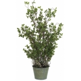 EUROPALMS Evergreen shrub 120cm