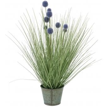 EUROPALMS Pompon Gras, 53cm, purple
