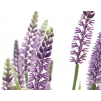 EUROPALMS Lavender grass, 46cm #2