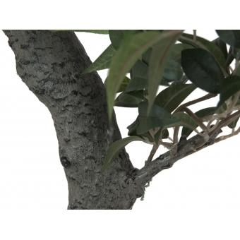 EUROPALMS Ficus Forest Tree, 80cm #2