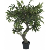 EUROPALMS Ficus Forest Tree, 80cm