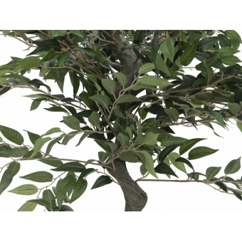 EUROPALMS Ficus Forest Tree, 110cm #2