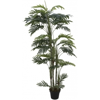 EUROPALMS Phoenix palm with multiple trunk, 170cm
