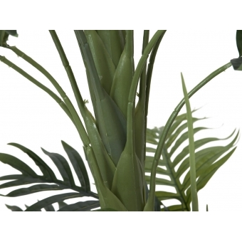 EUROPALMS Phoenix palm with multiple trunk, 170cm #2
