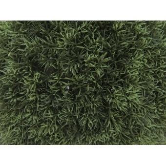 EUROPALMS Grass ball, 39cm #2
