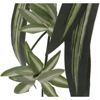 EUROPALMS Spider plant, 60cm #2