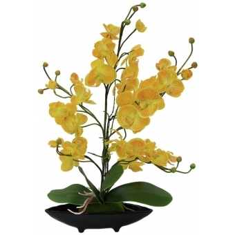 EUROPALMS Orchid Arrangement EVA, yellow