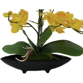 EUROPALMS Orchid Arrangement EVA, yellow #3