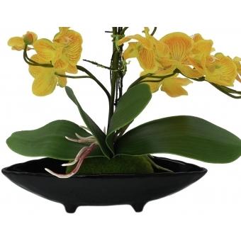 EUROPALMS Orchid Arrangement EVA, yellow #3