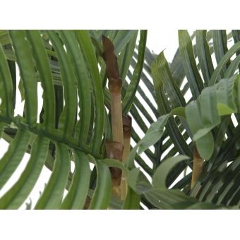 EUROPALMS Kentia palm tree, 140cm #3