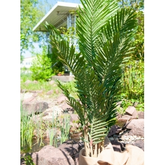 EUROPALMS Kentia palm tree, artificial plant, 140cm #7