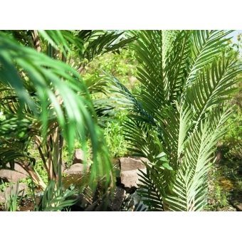 EUROPALMS Kentia palm tree, artificial plant, 140cm #12