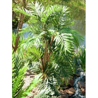 EUROPALMS Kentia palm tree, artificial plant, 140cm #16