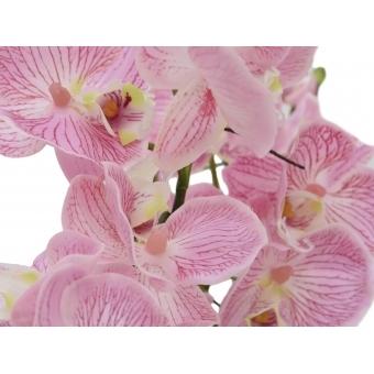 EUROPALMS Orchid Arrangement EVA, purple #2