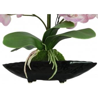 EUROPALMS Orchid Arrangement EVA, purple #3