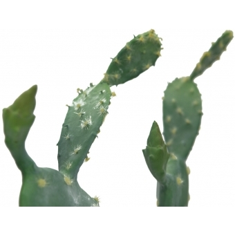 EUROPALMS Nopal cactus, 76cm #2