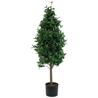 EUROPALMS Laurel Cone Tree, 120cm