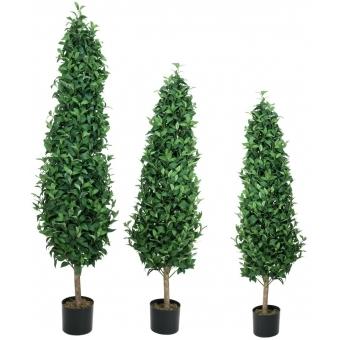 EUROPALMS Laurel Cone Tree, 120cm #3