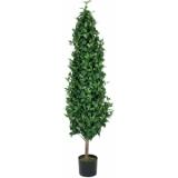 EUROPALMS Laurel Cone Tree, 150cm