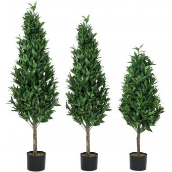 EUROPALMS Laurel Cone Tree, high trunk, 120cm #3