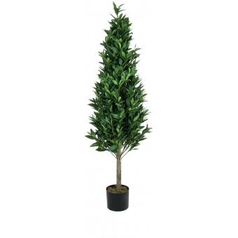 EUROPALMS Laurel Cone Tree, high trunk, artificial plant, 180cm