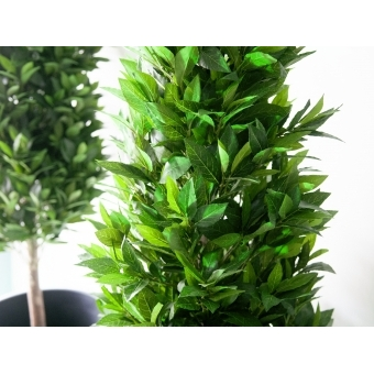 EUROPALMS Laurel Cone Tree, high trunk, artificial plant, 180cm #4