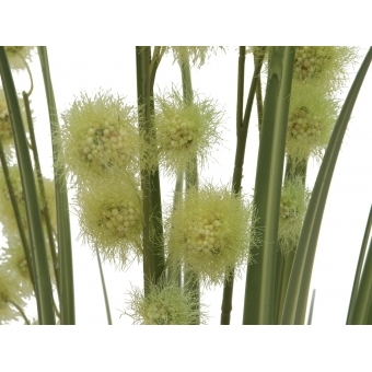 EUROPALMS Allium Grass, 122cm #2