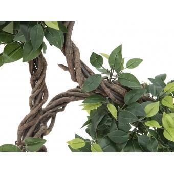 EUROPALMS Ficus spiral trunk, 160cm #2