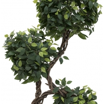 EUROPALMS Ficus spiral trunk, 160cm #3