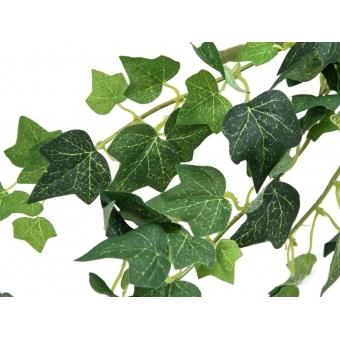 EUROPALMS Ivy Bush, 50 cm #2