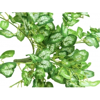 EUROPALMS Nephthytis bush, artificial, 50cm #2
