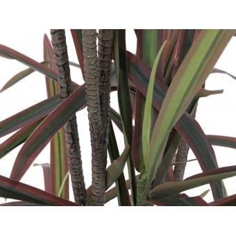 EUROPALMS Dracaena, green-red, 180cm #3