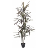 EUROPALMS Dracaena, green-red, 180cm