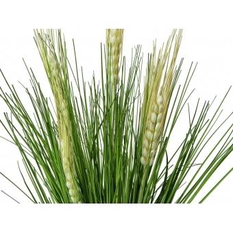 EUROPALMS Wheat Bunch Early Summer 65cm #2