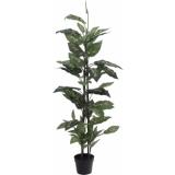 EUROPALMS Dieffenbachia, 120cm