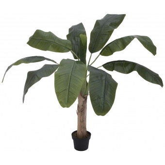 EUROPALMS Banana tree, 100cm