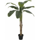 EUROPALMS Banana tree, 145cm