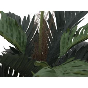 EUROPALMS Coconut palm, 90cm #2