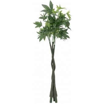 EUROPALMS Pachira balltree, 160cm #2