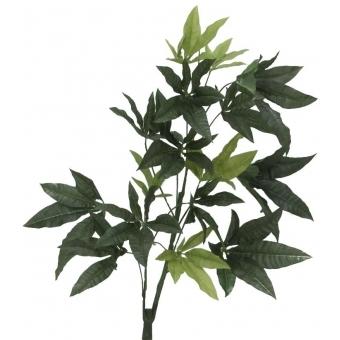 EUROPALMS Pachira balltree, 160cm #3