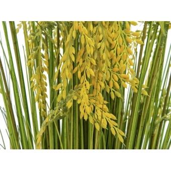 EUROPALMS Reed Grass Bunch 118cm #2