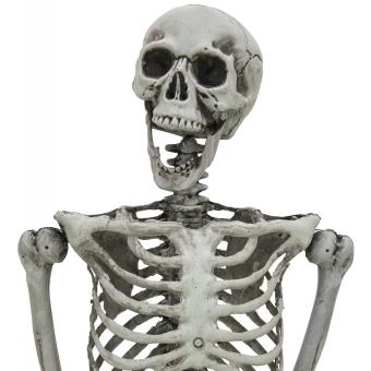 EUROPALMS Halloween Skeleton, bleached, 160cm #2