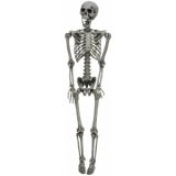 EUROPALMS Halloween Skeleton, bleached, 160cm