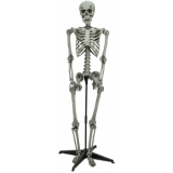 EUROPALMS Halloween standing skeleton, 160cm
