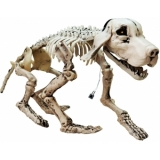 EUROPALMS Halloween Skeleton Dog, 71x40x25cm