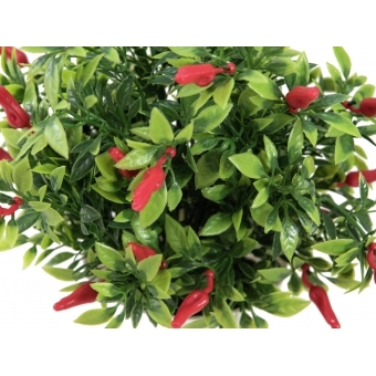 EUROPALMS Chili in pot #2