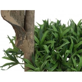 EUROPALMS Bonsai tree, multi trunk, 170cm #2