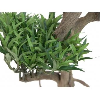 EUROPALMS Bonsai tree, multi trunk, 170cm #3