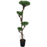 EUROPALMS Bonsai tree, multi trunk, 170cm
