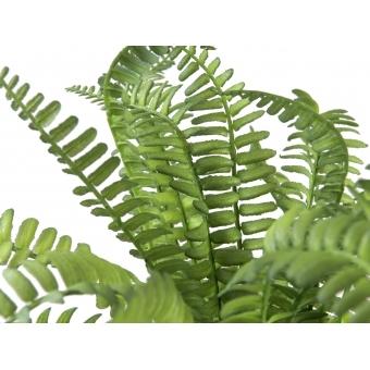 EUROPALMS Boston fern in pot, 28 cm #2